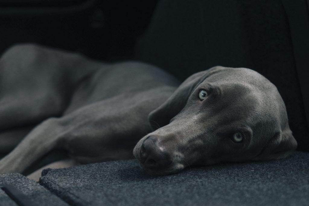Entspannung durch Hunde, bgm21